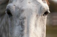 Free Horse Eyes Stock Images - 26882284