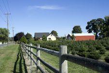 Free Farm For Christmas Trees Stock Photo - 26882560