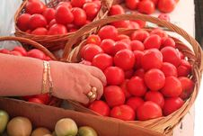 Free Hand Choosing Tomatoes Royalty Free Stock Image - 26882616