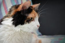 Free Cat Is Awake Royalty Free Stock Photos - 26883628