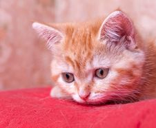 Free Red Kitten Lies And Looks Ahead Stock Image - 26887211