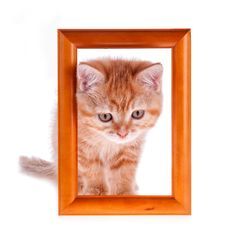 Free Red Kitten Looks Out From A Wooden Frame Stock Photo - 26887280