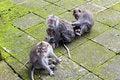 Free Monkey Family Stock Photos - 26896103