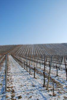 Free Vineyard Landscape Royalty Free Stock Photo - 26894715