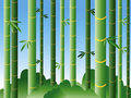 Free Bamboo Forest Stock Photo - 2695920
