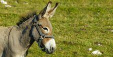 Free Little Donkey Stock Photos - 2691093