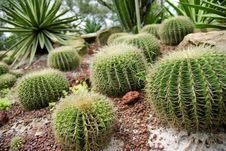 Free Cactus Stock Photos - 2691283