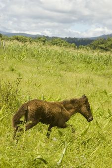 Free Foal Stock Photography - 2695122
