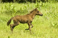 Free Foal Royalty Free Stock Photography - 2695207