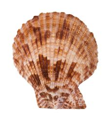 Free Close-up Of Sea Shell Cutout Royalty Free Stock Image - 2696766