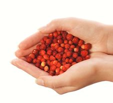 Free Handful Of Strawberries Stock Photography - 2696892