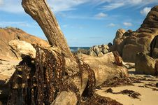 Free Big Drift Wood Stock Images - 2698714