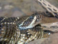 Free Western Rattlesnake Stock Photo - 2698850