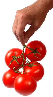 Free Tomato In Hand Royalty Free Stock Photo - 2699125