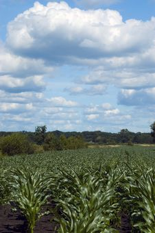 Free Colorful Cloudscape Corn Field Royalty Free Stock Image - 2699726