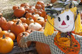 Free Halloween Scarecrow & Pumpkin Patch Royalty Free Stock Image - 26901986