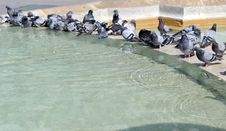 Pigeons In The Fountain Royalty Free Stock Photo