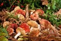 Free Basket With Mushrooms Stock Photo - 26912460