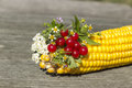 Free Bouquet Of Flowers And Berries With Corn Royalty Free Stock Photography - 26914627