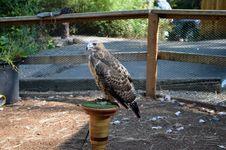 Free Bird On Post Royalty Free Stock Photos - 26912308