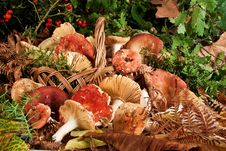 Free Basket With Mushrooms Stock Photo - 26912460