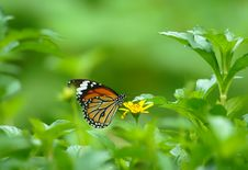 Free Butterfly Over A Flower Stock Photography - 26912982