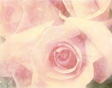 Free Vintage Photo Of Roses Stock Image - 26913431