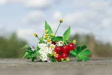 Free Bouquet Of Flowers And Berries Royalty Free Stock Image - 26914556