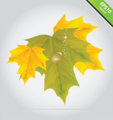 Vector Autumn Leaves Yellow And Green Color Royalty Free Stock Photo