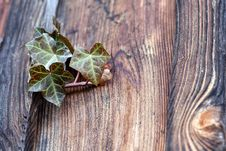 Free An Ivy Plant Stock Image - 26915551