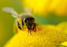 Free Nectar Stock Photography - 26916412