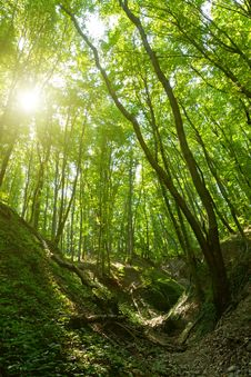 Free Forest Royalty Free Stock Photography - 26919957