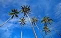 Free Samui Island Thaid Royalty Free Stock Photo - 26924255