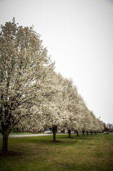 Free Blooming Treeline Royalty Free Stock Images - 26920119
