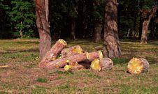 Free Heap Of Sawn Pine Logs Stock Image - 26921011