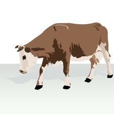 Free Cow Royalty Free Stock Photos - 26922328