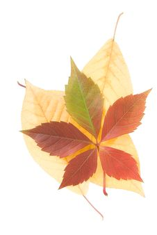 Free Colored Fallen Autumn Leaves Stock Photos - 26926543