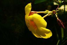 Free Yellow Flower Royalty Free Stock Image - 26928276