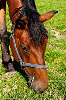 Free Horse Stock Images - 26928484