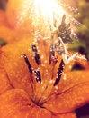 Free Fairy Sweet Flower Royalty Free Stock Photo - 26930045