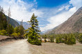 Free Pine Forest In Annapurna Trek Royalty Free Stock Photography - 26930377
