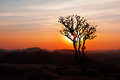 Free Tree In The Sunset Sky Stock Photos - 26930843