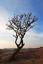 Free Tree In The Sunset Sky Royalty Free Stock Image - 26931206