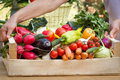 Free Organic Vegetables In Hands &x28;create&x29; Royalty Free Stock Image - 26934966