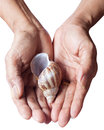 Free Woman&x27;s Hands Hold The Shell Royalty Free Stock Photography - 26939397