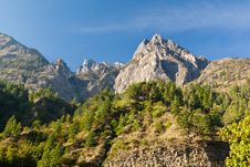 Free Pine Forest In Annapurna Trek Stock Photo - 26930370