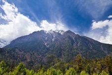 Free Pine Forest In Annapurna Trek Stock Photos - 26930373