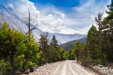Free Pine Forest In Annapurna Trek Royalty Free Stock Photo - 26930385