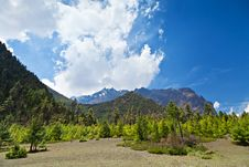 Free Pine Forest In Annapurna Trek Stock Photo - 26930440