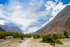 Free Pine Forest In Annapurna Trek Stock Photos - 26930473
